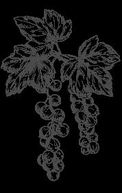 disegno a mano grappolo di uva