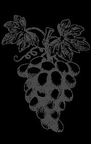 grappolo di uva disegno a mano