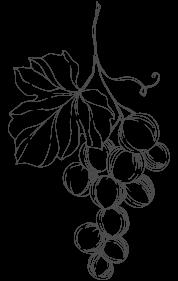 grappolo di uva disegno