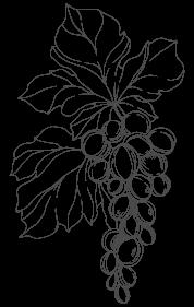 grappolo uva disegno a mano